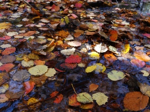 Chaos of leaves_Nov3