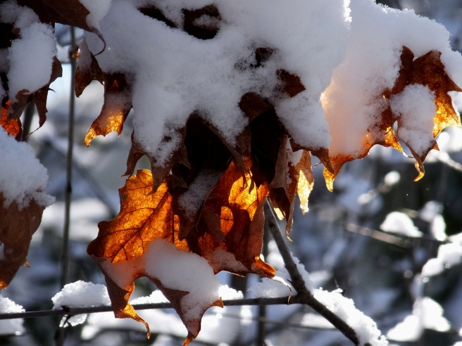 Winter_Leafology