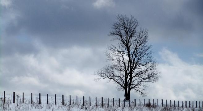 goinginwardinvite_tree_sky