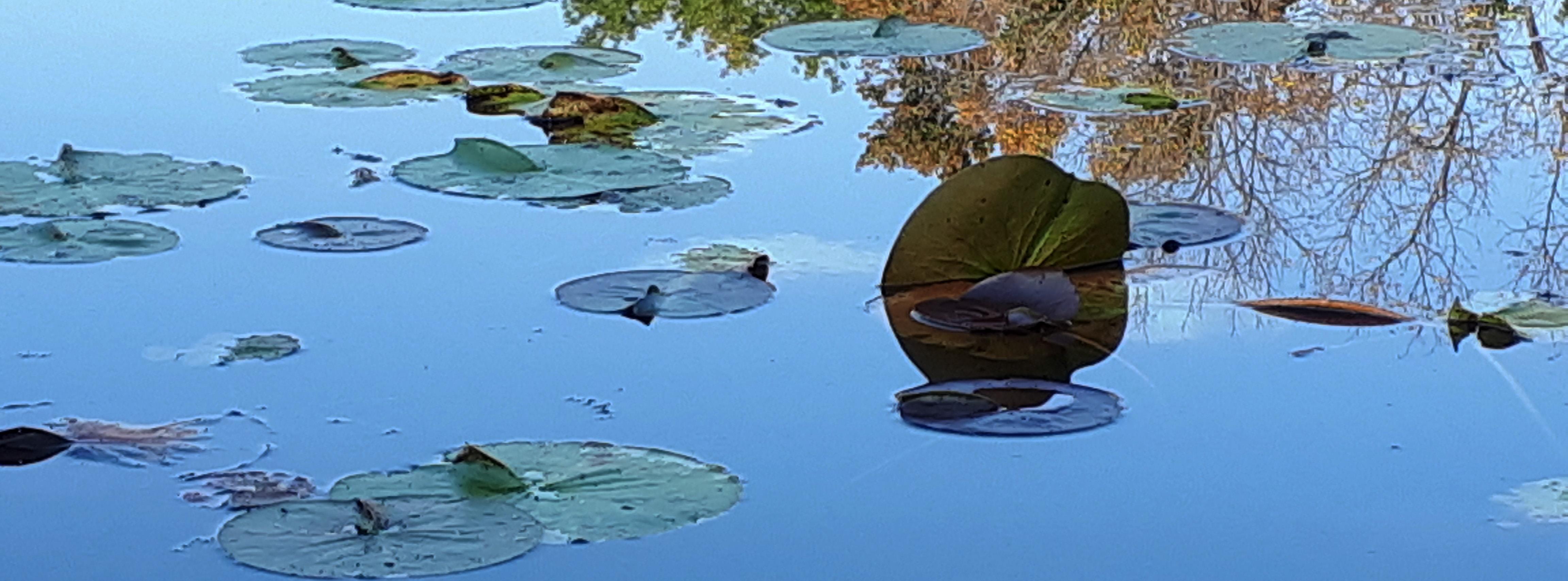 lotus_banner.jpg